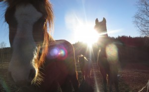 cropped-hästarna-mars.jpg