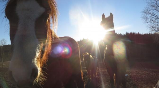 hästarna mars