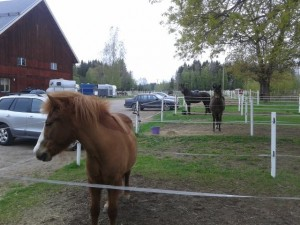 kursdeltagare häst