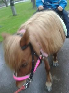 pandora ponnyridning juni vågen