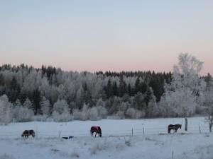 hästarna januari 2016